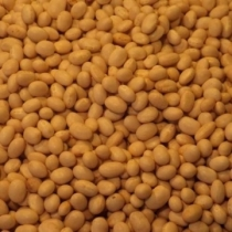 Haricot Beans Large Size - Click here to view and order this product