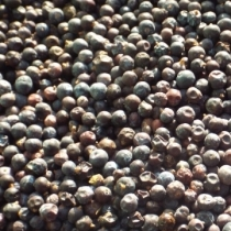 Juniper Berries - Click here to view and order this product