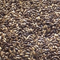 Milk Thistle Seed - Click here to view and order this product